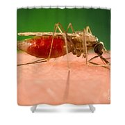 Anopheles Minimus, Malaria Vector Shower Curtain