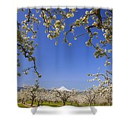 Apple Blossom Trees In Hood River Shower Curtain