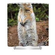 Arctic Ground Squirrel Shower Curtain