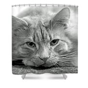 Arthur Shower Curtain
