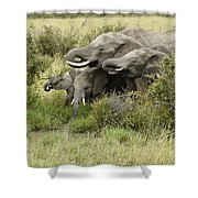 At The Waterhole Shower Curtain