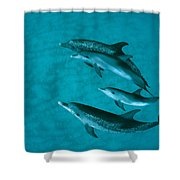 Atlantic Spotted Dolphins Shower Curtain