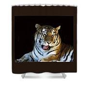 Awaking Tiger Shower Curtain