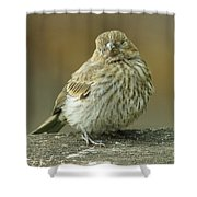 Baby House Finch Shower Curtain