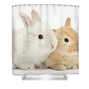 Baby Lop Rabbits Shower Curtain