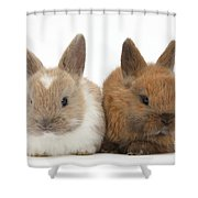 Baby Rabbits Shower Curtain