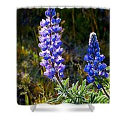 Back Lit Lupine Shower Curtain