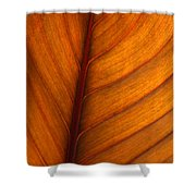 Backlit Leaf Shower Curtain