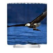 Bald Eagle Haliaeetus Leucocephalus Shower Curtain
