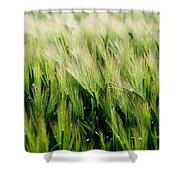 Barley, Co Down Shower Curtain
