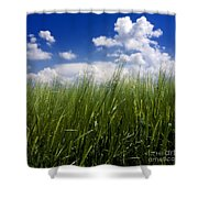 Barley Field  In Limagne. Auvergne. France Shower Curtain