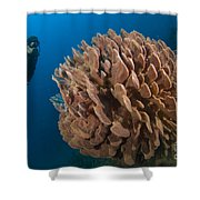 Barrel Sponge And Diver, Papua New Shower Curtain