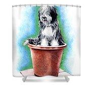 Beardie In A Pot Shower Curtain