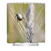 Beetle On The Wheat Shower Curtain