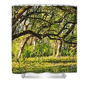 Bent Trees Shower Curtain