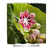Berry Blossom Shower Curtain