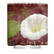 Bindweed - The Wild Perennial Morning Glory Shower Curtain