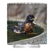 Bird Bath Fun Time Shower Curtain