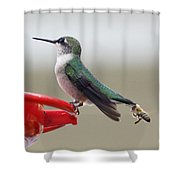 Birds And Bee's Shower Curtain