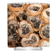 Birds Nest Fungus Shower Curtain