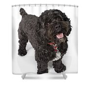 Black Bichon-cocker Spaniel Dog Shower Curtain