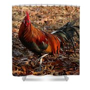 Black Breasted Red Phoenix Rooster Shower Curtain