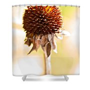 Black-eyed Susan After The Winter Shower Curtain