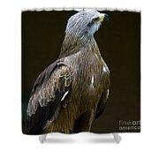 Black Kite 1 Shower Curtain