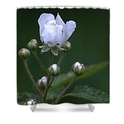 Blackberry Vine Flower Shower Curtain