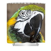 Blue And Gold Macaw Shower Curtain
