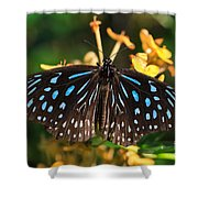 Blue Glassy Tiger Butterfly Shower Curtain