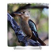 Blue-winged Kookaburra Shower Curtain