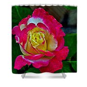 Blushing Rose Shower Curtain