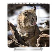 Bobcat Shower Curtain by Jeff Grabert