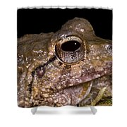 Bobs Robber Frog Shower Curtain