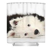 Border Collie Puppy Shower Curtain