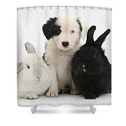 Border Collie Pups With Black Rabbit Shower Curtain
