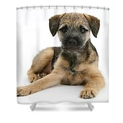 Border Terrier Puppy Shower Curtain