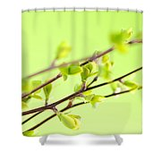Branches With Green Spring Leaves Shower Curtain by Elena Elisseeva