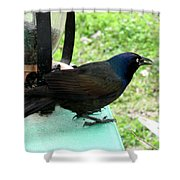 Brewers Black Bird  Shower Curtain