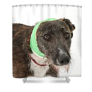 Brindle Lurcher Wearing A Bandage Shower Curtain