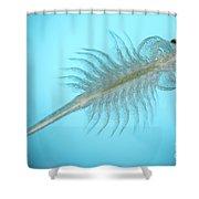 Brine Shrimp Shower Curtain