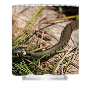 British Grass Snake Shower Curtain