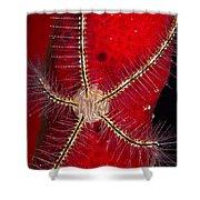 Brittle Star On Sponge, Belize Shower Curtain