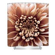 Brown Flower Shower Curtain