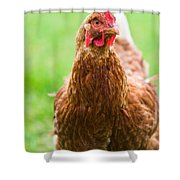 Brown Hen On A Lawn Shower Curtain