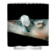 Brownsnout Spookfish Shower Curtain
