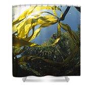 Bull Kelp Underwater Clayoquot Sound Shower Curtain
