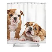 Bulldog Puppies Shower Curtain