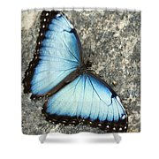 Butterfly, Niagara Botanical Gardens Shower Curtain
